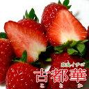 奈良産 古都華イチゴ(ことかいちご) Lサイズ(15粒/1パック)2パック入り箱|奈良いちご イチゴ 高級苺 ギフト プレゼント ホワイトデー