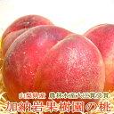 山梨産 加納岩果樹園の桃(かのいわかじゅえんのもも)「訳あり」約2.5kg 9〜11個入り|モモ ピーチ お中元