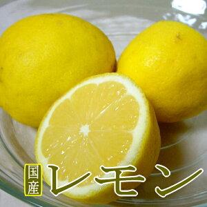 国産 レモン 黄色 Mサイズ 約5kg 45個前後入り?檸檬 れもん ビタミンC イエローレモン lemon 5キロ