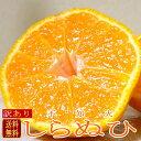【送料無料】訳あり 不知火(しらぬひ)オレンジ 約2kg (サイズお任せ9〜11個前後入り)小粒であったりやや外観が難ありの 「訳ありし…