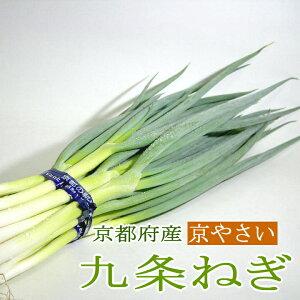 ねぎ 「京野菜」九条ネギ(くじょうねぎ) 12本前後入り 京都産 葱 京のブランド産品 母の日 京やさい