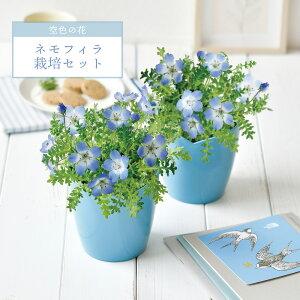 空色の花ネモフィラ栽培セット