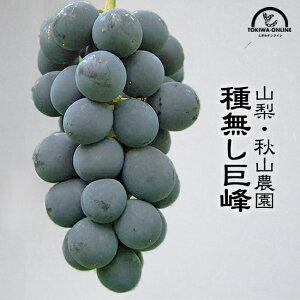 巨峰 種無し ぶどう 山梨 2kg 3~4房 進物 ギフト 送料無料 フルーツ くだもの 通販 秋山農園