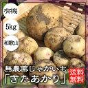 無農薬じゃがいも(きたあかり)5kg【送料無料】自然栽培(無農薬)有機肥料のみ使用|じゃがいも|ジャガイモ|無農薬|和歌山|グリーンジャンクション