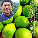 レモン 無農薬 国産 5kg 送料無料 グリーンレモン 青レモン ノーワックス 除草剤不使用 有機栽培 和歌山産 レモン水 …