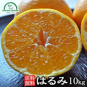 はるみ みかん ミカン 送料無料 10kg 和歌山産 農園直送 果物 ノーワックス 安心 安全 グリーンジャンクション