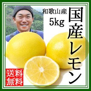 レモン 国産 無農薬 送料無料 5kg 黄色レモン ノーワックス 農園直送 和歌山産 有機栽培 産地直送 オーガニック グリーンジャンクション