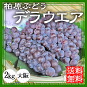 【ぶどう】デラウエア 2kg【送料無料】(柏原ぶどう)【お中元】【贈答】【ギフト】【農園直送】 大阪|贈り物|ブドウ|通販|乾ぶどう農園| ランキングお取り寄せ