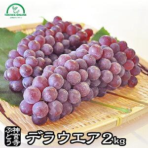 父の日 ぶどう デラウェア 送料無料 2kg フルーツ 果物 プレゼント ギフト お中元 ハウスデラウェア 贈答用 農園直送 ブドウ 贈り物 神宮寺ぶどう