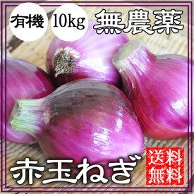 赤玉ねぎ 無農薬 10kg 送料無料 自然栽培 赤玉葱 赤タマネギ 無農薬 オーガニック 和歌山 グリーンジャンクション
