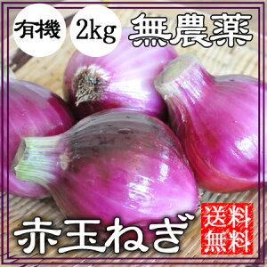 赤玉ねぎ 無農薬 2kg 送料無料 自然栽培 赤玉葱 赤タマネギ 無農薬 オーガニック 和歌山 グリーンジャンクション