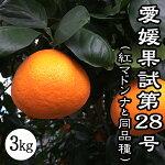 紅まどんなと同品種、愛媛果試第28号、送料無料
