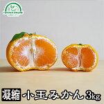 小玉みかん3kg送料無料【小玉みかん】