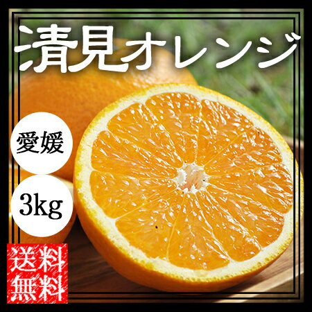 清見 清見オレンジ 3kg 送料無料 清見タンゴール きよみ 愛媛 産地直送 マルナカ農園