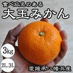 大玉みかん2L3L送料無料愛媛八幡浜訳並みの価格