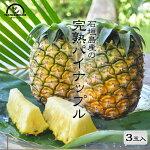 パイナップル沖縄石垣島家庭用3kg送料無料国産パイナップルパイン