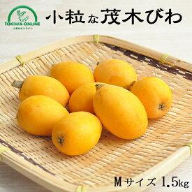 びわ 茂木びわ 送料無料 1.5kg Mサイズ 無農薬 長崎産 果物 フルーツ 枇杷 ビワ 農園直送 安心 安全 千々農園