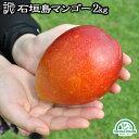 マンゴー 訳あり 沖縄 送料無料 2kg 石垣島産 家庭用 農園直送 沖縄マンゴー ワケあり フルーツ 南国フルーツ 果物 …