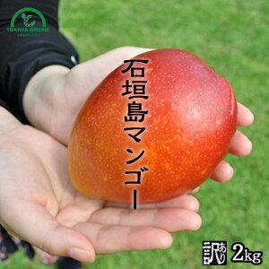 マンゴー 訳あり 2kg 沖縄 送料無料 石垣島産 農園直送 石垣島マンゴー わけあり 沖縄マンゴー 完熟マンゴー フルーツ 南国フルーツ 果物 ときわマンゴー農園