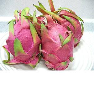 徳之島産 ドラゴンフルーツ 2kg(5〜6個入)収穫時期7月〜9月