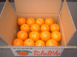 徳之島産たんかん(5kg) 1箱 柑橘類の中では一番糖度が高く甘くて美味しい。他のみかんよりビタミンCも豊富で美容にも良くご贈答用に大変喜ばれており特に徳之島産は気候風土にマッチして