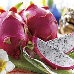 徳之島産 ドラゴンフルーツ 2kg(5〜6個入)収穫時期8月〜9月 低カロリーで食物繊維が豊富で、美容に良い!