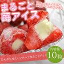 送料無料 まるごと苺アイス 10粒 ※練乳いちごアイス、アイス、イチゴ、あいす【RCP】
