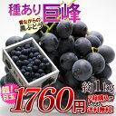 山形産種あり巨峰(約1kg) 葡萄、種ありぶどう、ブドウ、種あり巨峰