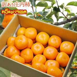 送料無料 訳あり庄内柿 5kg前後 バラ詰め ※柿、かき、カキ、山形産、種なし柿、