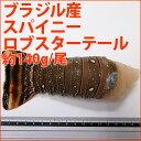 ブラジル産スパイニーロブスターテール一尾 約140g (5オンス)