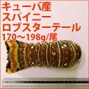 スパイニーロブスターテール一尾 170〜198g (6〜7オンス)