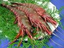 天然・無添加・有頭シータイガーえび 約60g/尾 4尾×2パック 小分け冷凍品
