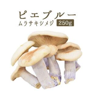 ピエブルー(紫シメジ)<フランス産>【250g】【冷蔵品】