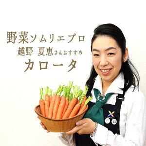 カロータ (ニンジン) <イタリア>野菜ソムリエおすすめ【1P=約250g】