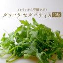 ルッコラ セルバティカ (ルーコラ) イタリア野菜<イタリア>【1P=125g】【冷蔵品】