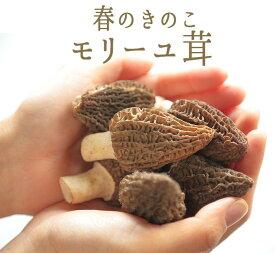 フレッシュ モリーユ モリーユ茸 (アミガサ茸)きのこ キノコ <トルコ産>【100g】【冷蔵品】