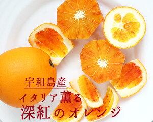宇和島産 タロッコオレンジ ブラッドオレンジ オレンジ <愛媛県宇和島産>【1kg】