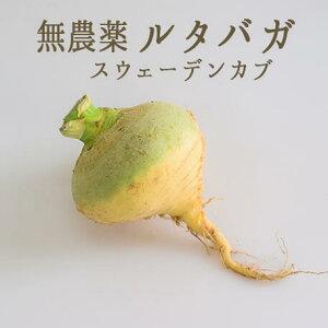 【無農薬】ルタバガ スウェーデンカブ 【1個=約1-2kg】【¥120/100g当たり再計算】<山形県>