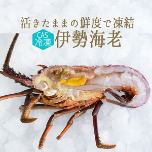 【CAS冷凍】活〆 伊勢海老 半身 <静岡・和歌山県> 【半身=約130g前後】