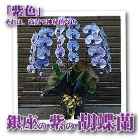 花 胡蝶蘭 銀座の紫の胡蝶蘭3本立 紫 送料無料 開店開業祝胡蝶蘭 フラワーギフトの配送花は お祝い 開店 御祝 お祝 上場祝 花 就任祝 贈答 バレンタイン