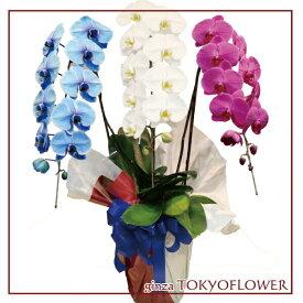 トリコロール胡蝶蘭 フラワーギフト 蘭 3本立 フラワーギフト 送料無料 お祝い 開店 御祝 お祝 上場祝 花 就任祝 贈答 母の日 早割