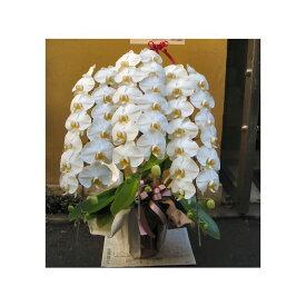 胡蝶蘭 3本立 最高級 40輪程度 花 送料無料 お祝い 開店 御祝 お祝 上場祝 花 就任祝 贈答