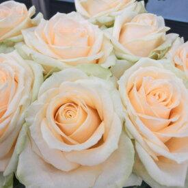 バラ苗 2年大株 4号 グランモゴール Climbing Roses C1230 クライミング ローズ 送料無料 贈答 バレンタイン