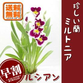 洋ラン 珍しい蘭 ミルトニア フラワーギフト2021 花鉢 鉢植え 送料無料 沖縄配送不可 母の日 早割