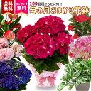 母の日 遅れてごめんね 2021季節の花鉢 春 おまかせ 鉢植え 花鉢 盆 内祝い ギフト 送料無料 母の日 プレゼント 盆栽 …