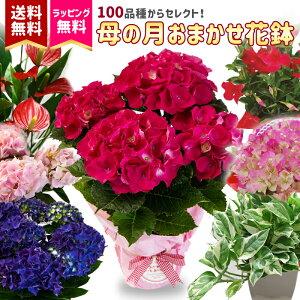 2021季節の花鉢 春 おまかせ 鉢植え 花鉢 盆 内祝い ギフト 送料無料 父の日 プレゼント 盆栽 花壇 園芸 花のプレゼント