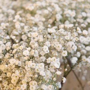 【単品でのご注文はできません】かすみ草追加 かすみそう カスミソウ 追加 ブーケ 花束 アレンジメント プレゼント 贈答