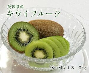 送料無料【愛媛県産】キウイフルーツ 2S〜Mサイズ混合 3kg (約40個入)