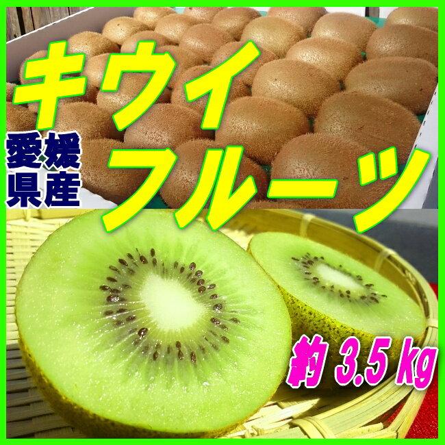 送料無料【愛媛県産】キウイフルーツ 約3500g (30〜33個入)