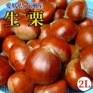 【愛媛県大洲産】生栗(中粒 2Lサイズ)1kg